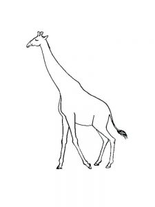 Giraffe Colouring Pages For Adults