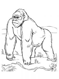 Gorilla Colouring In Pages