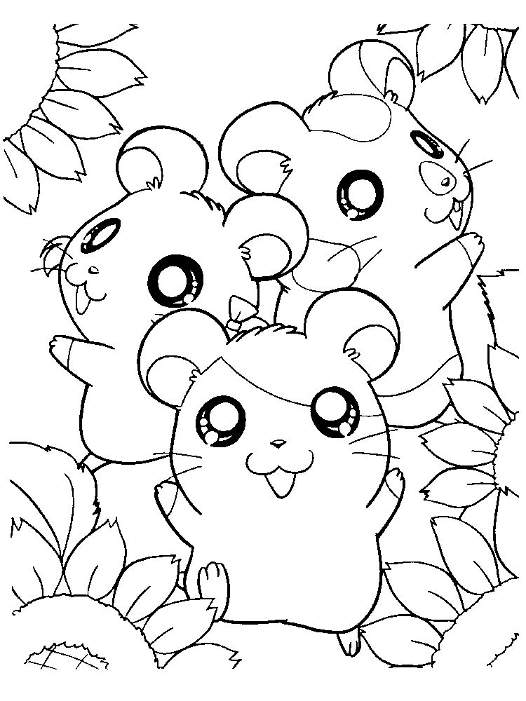 Hamster Coloring Pages Free