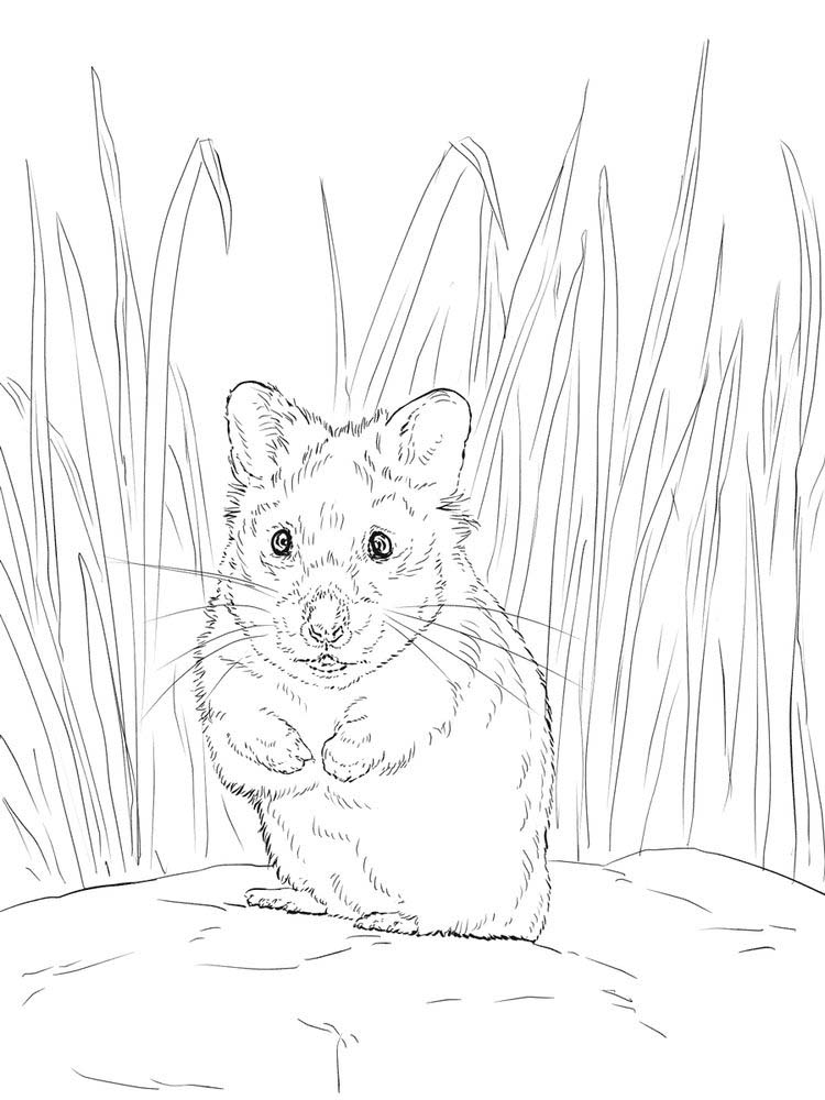 Hamster Coloring Pages Pdf