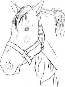 Horse Coloring Pages Adults
