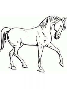 Horse Coloring Pages For Adults Online