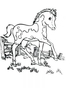 Horse Coloring Pages For Adults Printable