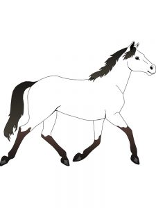 Horse Coloring Pages For Adults To Print