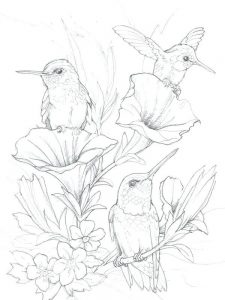 Hummingbird Coloring Book Pages