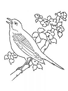 Hummingbird Coloring Pages For Adults