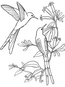 Hummingbird Colouring Pages