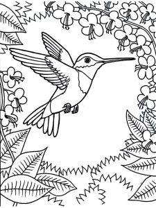 Hummingbirds Coloring Pages
