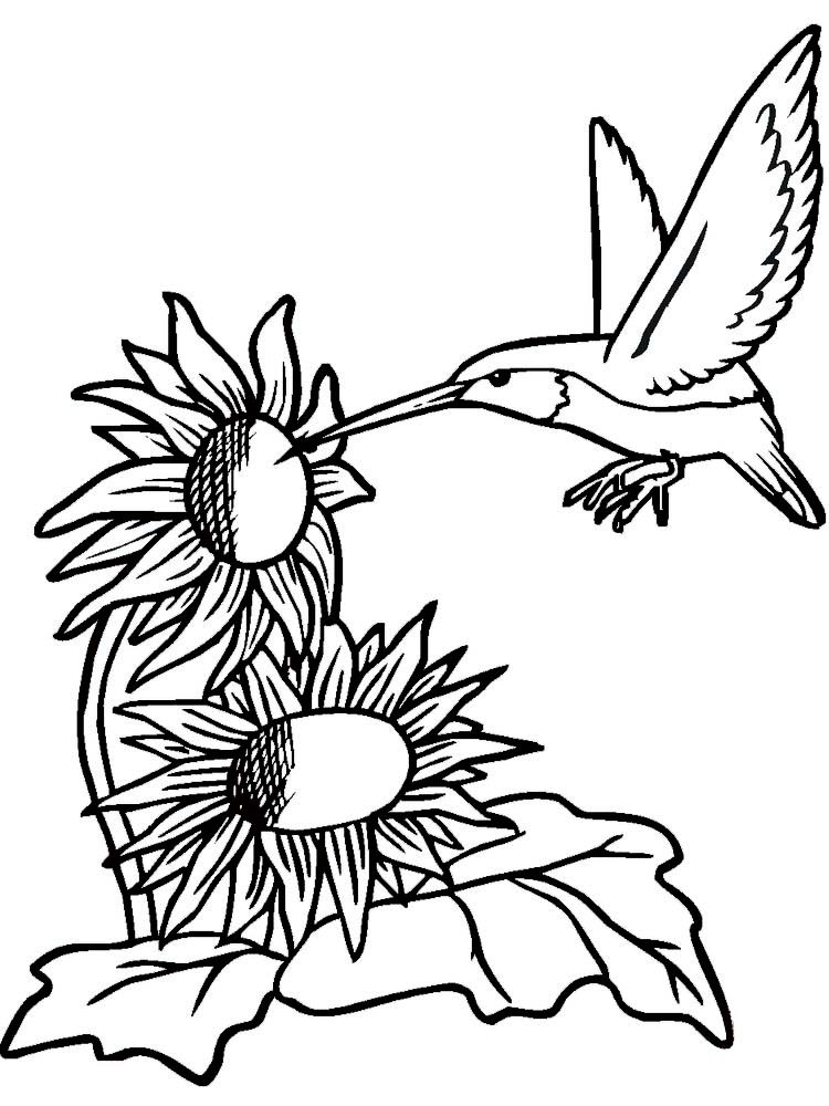 Hummingbirds Coloring Pages For Adults
