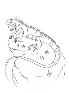 Iguana coloring pages free
