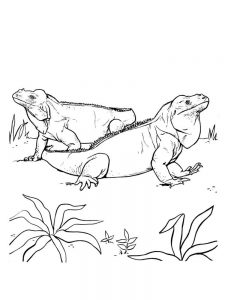 Iguana coloring pages picture
