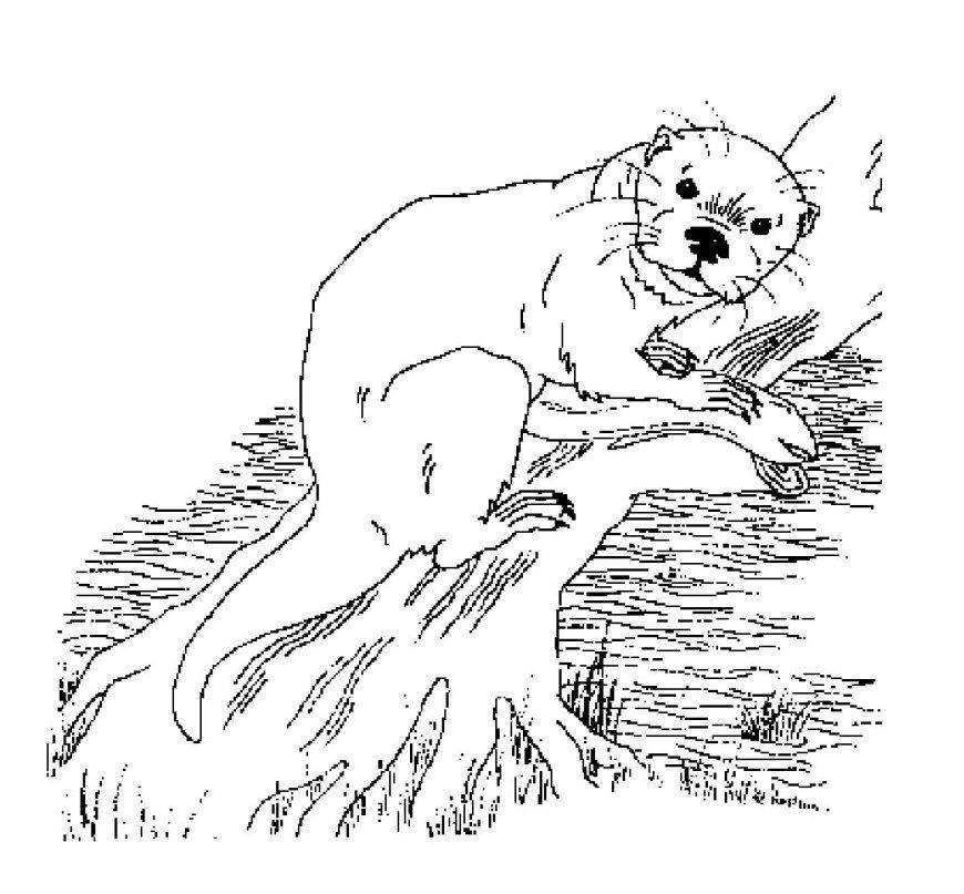 Image Of Otter Coloring Pages