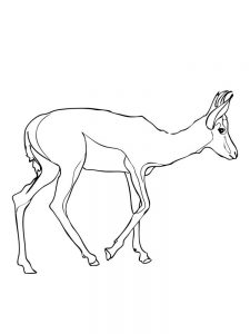 Impala coloring pages free