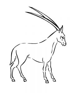 Impala coloring pages pdf