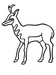 Impala coloring pages printable