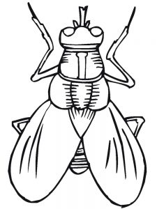 Insects Coloring Pages For Preschoolers