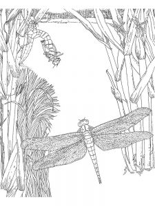 Insects Coloring Pages To Print Out