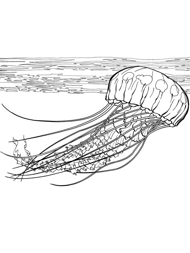Jellyfish Coloring Sheets Printable