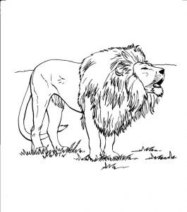 Kids Coloring Pages of Lion