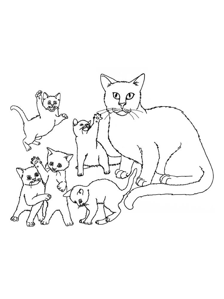 Kitten Family Coloring Pages