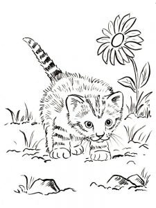 Kitten Flowers Coloring Pages