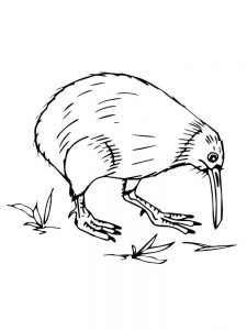 Kiwi coloring pages free