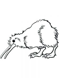 Kiwi coloring pages image