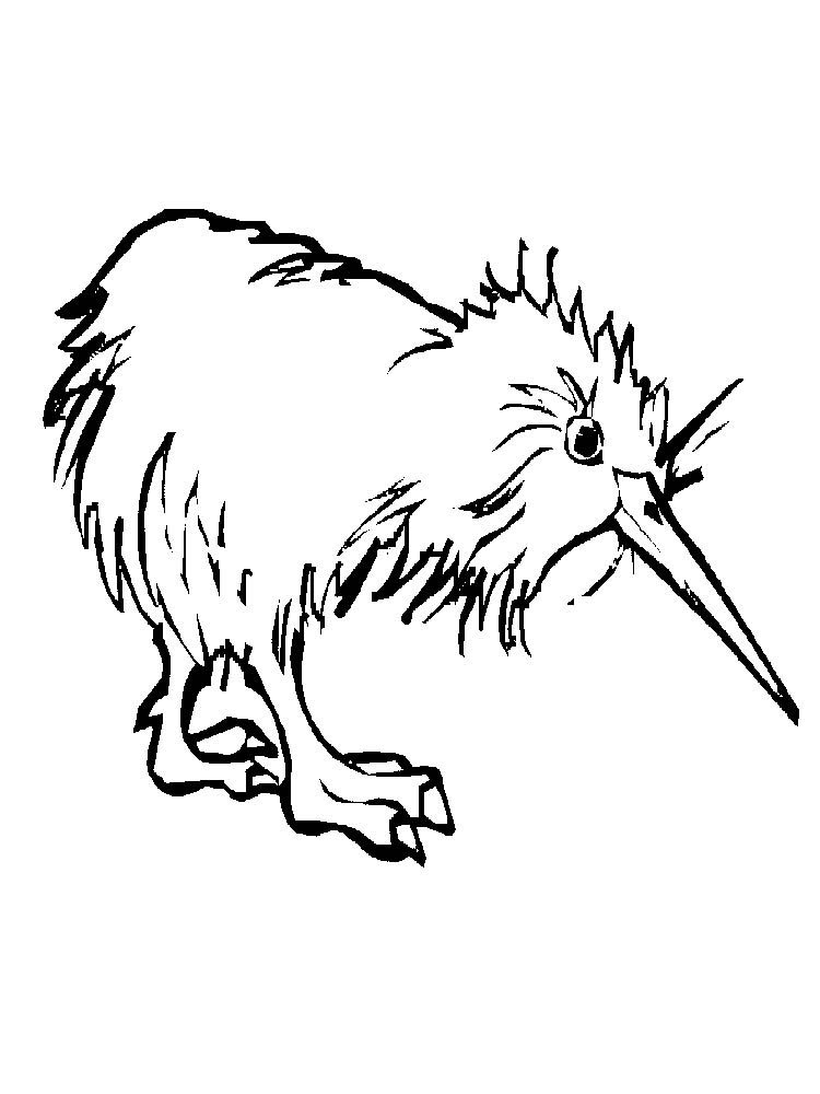 Kiwi coloring pages picture