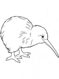 Kiwi coloring pages print