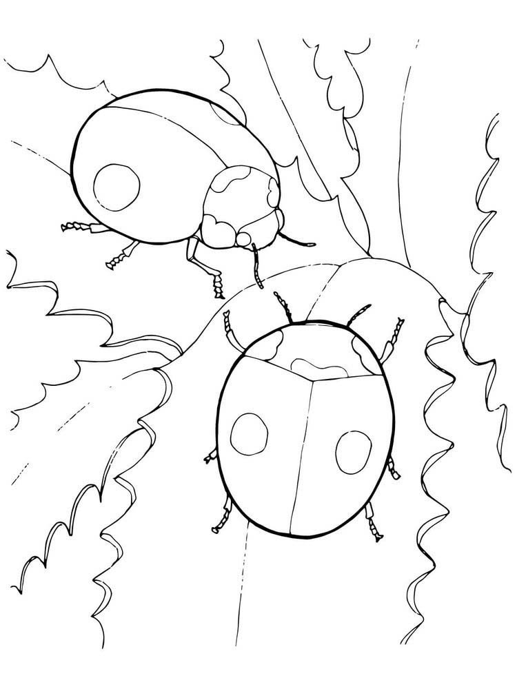 Ladybird coloring pages printable