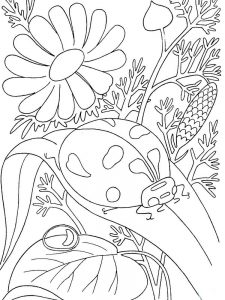 Ladybird coloring pages to print