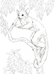 Lemur Coloring Pages
