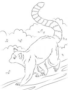 Lemur Coloring Pages Printable