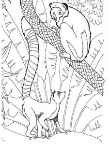 Lemur Madagascar Coloring Pages
