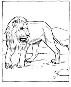 Lion Printable Coloring Pages