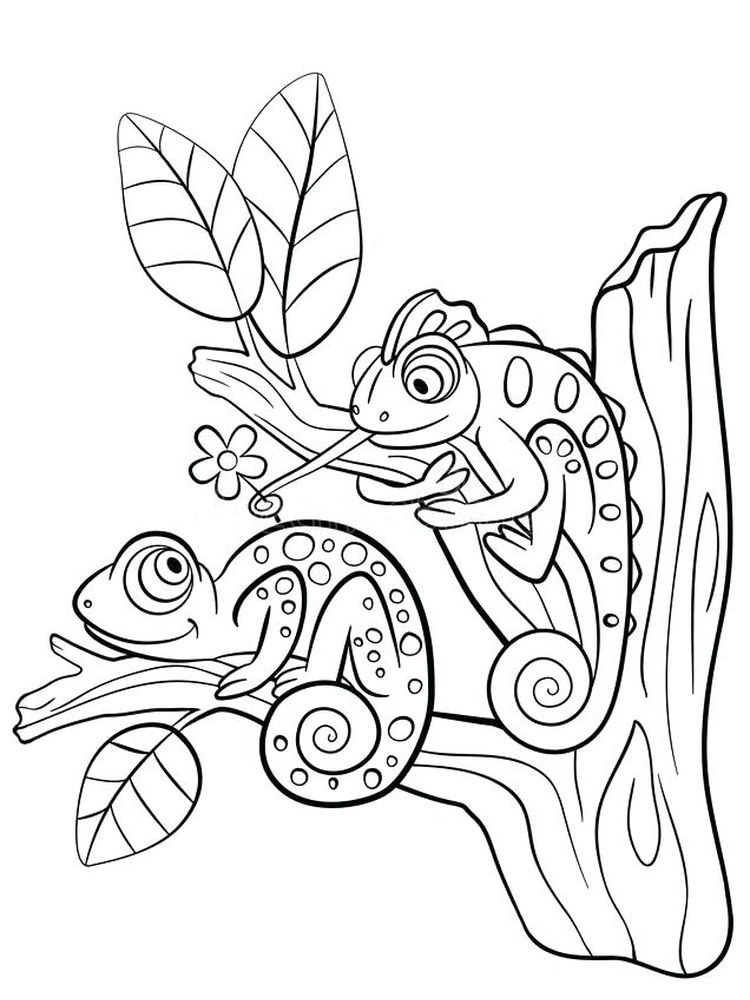 Lizard Coloring Book Pages