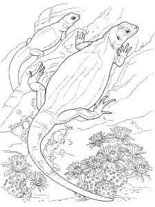 Lizard Coloring Pages For Preschool