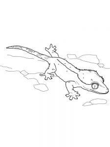Lizard Coloring Pages Free