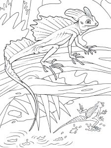 Lizard coloring pages picture
