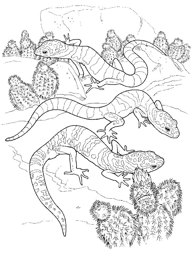 Lizard coloring pages printable