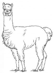 Llama Coloring Pages Printable