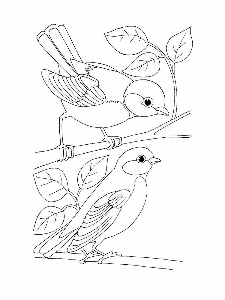 Love Bird Coloring Pages