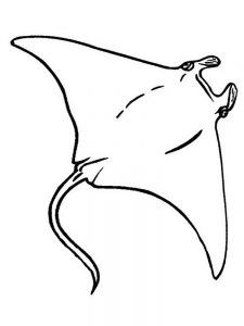 Manta Ray Coloring Pages Printable
