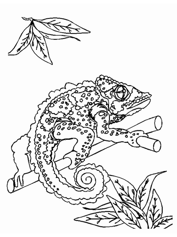 Monitor Lizard Coloring Pages