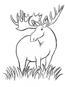 Moose And Zee Coloring Pages