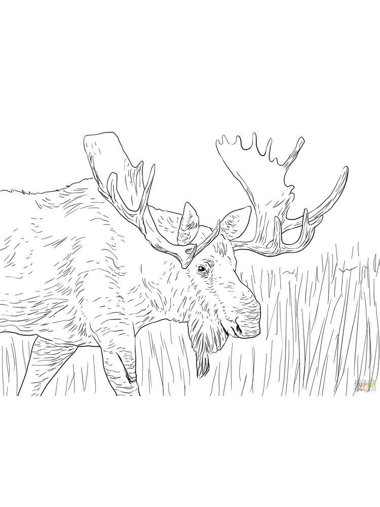Moose Coloring Pages For Adults