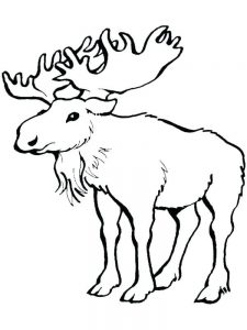 Moose Coloring Pages For Free