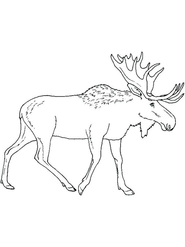 Moose Coloring Pages For Kids To Print