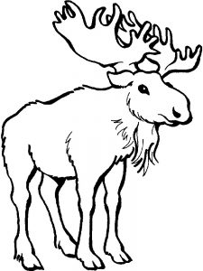 Moose Coloring Pages For Kindergarten