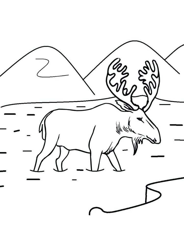 Moose Coloring Pages For Preschoolers